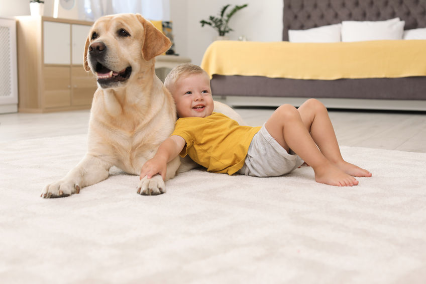 Carpet Cleaning Walnut Creek CA